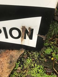 Large Champion Spark Plug Pictorial Enamel Sign